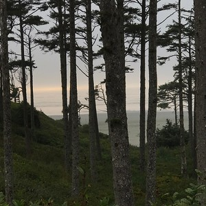 2017-09-07  Seabrook  View of the beach through trees