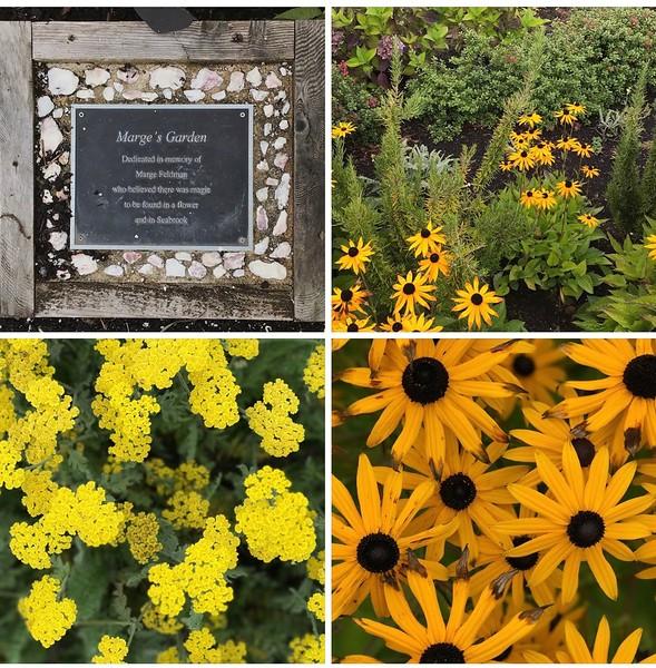 2017-09-08  Seabrook  Marge's garden