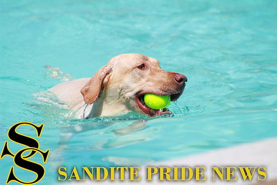 8/13/16 Doggy Dip Day at Chandler Park