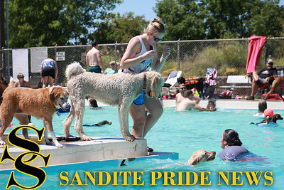 2016 Doggy Dip Day