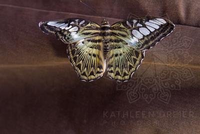 10/30/16_Cyclovia_KathleenDreierPhotography