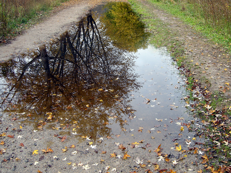 """""""Reflections of Autumn"""" by Les Hegedus"""