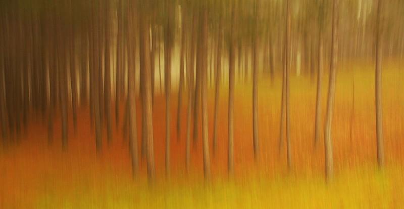 """Treeline"" by Bruce Lewis"