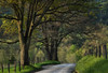 """Country Lane"" by Judy Griffin"