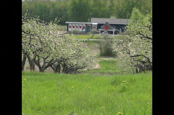 Bayfield Apple Blossom Run