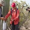 06/25/16_SaguaroFruitHarvest_KathleenDreierPhotography