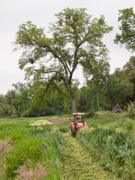 Four Frog Farm, April 25, 2012