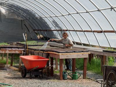 Four Frog Farm, June 8, 2012