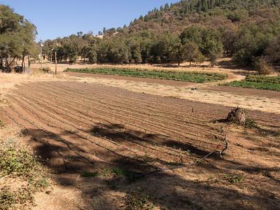 Four Frog Farm, October 18, 2012