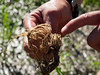 The roots are healthy and the original seed husk is easily visible in the larger photo.  100811_3130
