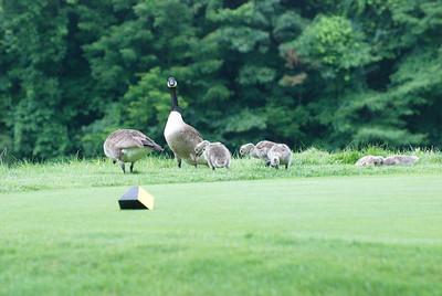 2013-07-01-HT-Golf-Classic-2013_027