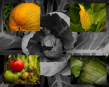Advent Community Garden