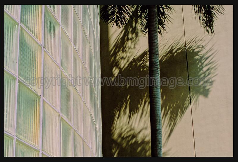 Palm Glass