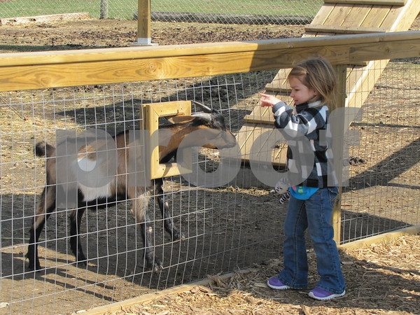 Lily Picard feeds one of the goats at the 'Back 40 Playground' at Applefest at the Community Orchard.
