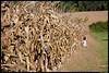 BayonetFarm-Sept2007-309