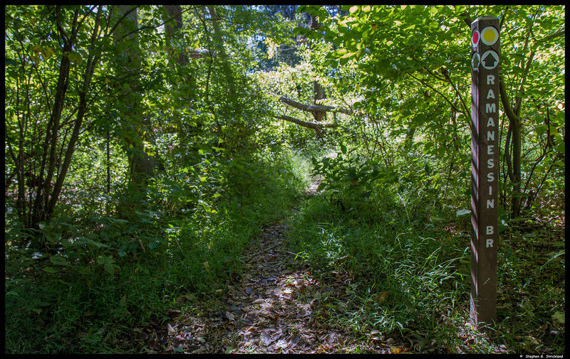 Nature quickly reclaims infrequently traveled trails.