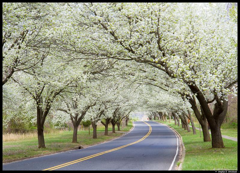 2012-03-SouthHollandTrees-067-Rev1