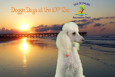 Doggie Day at the IOP Rec 2015