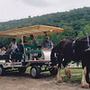 Hill reunion at John M. Hill's farm. Giving rides with John's shire horses. John far right.