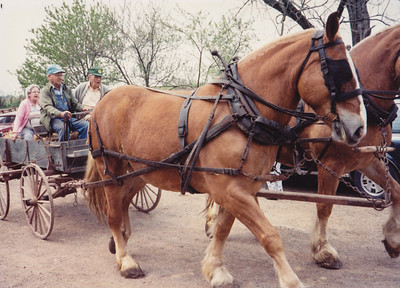 For Roy's 80th birthday, the family rented horses to pull Roy's Gruber Wagon. Seated: Mae, the owner of the horses, and Roy Schrack.