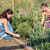 Jessie Evers (left) and Kelly Mollman tending to their garden at Hills Horizon Community Garden in Spearfish.  The ladies donate all of their produce to the Spearfish Community Food Pantry.  Many thanks!<br /> <br /> To take a closer look at this (and any other) photo in the gallery, simply click on the photo  and select a larger image from the menu at the top.