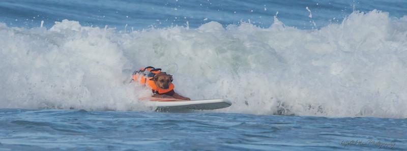 17063 Giselle SurfComp-1524