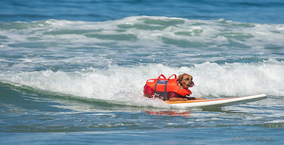 17063 Giselle SurfComp-ME-1770