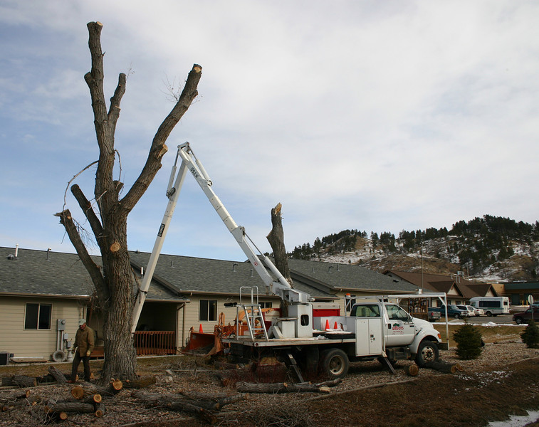 On February 11, 2009, Willson Tree Service rolled in to remove a couple of trees behind some YPA townhouses and the irrigation ditch that runs down the south side of Yellowstone Place.