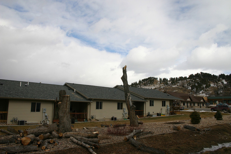 "More sawing, removal and clean-up is yet to be done, but workers are making progress on clearing out the dead trees behind 205 and 207 Yellowstone Place.  Click on this link to return to the <a href=""http://www.yellowstoneplace.blogspot.com""> Yellowstone Place Association</a> web site."