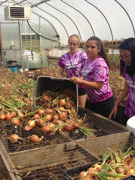 Nearly 300 University at Albany students from the Class of 2019 volunteered for the Regional Food Bank of Northeastern New York.
