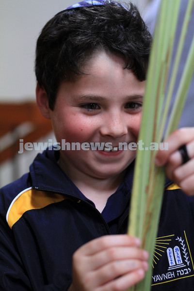Succot 2010.  Jarrod levy checking lulav at Mizrachi. Photo: Peter Haskin