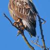 NWS-PT013015-eagles04A.jpg