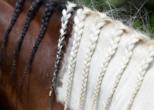 Reserve champion gelding, Dakota, owned by Jordyn Hensley, has braids that match his owner's.