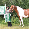 Kevin Burkett | Pharos-Tribune<br /> <br /> Jordyn Hensley won Reserve Grand Champion gelding for her horse, Dakota, in the 2017 Cass County 4-H Fair.