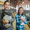 Lana Reese, 12, left, and her sister Zoe, 9, hold their favorite rabbits, Lurch and Lucille before they go to be judged at the Rabbit Show on Monday morning at the Cass County Fair. Fran Ruchalski | Pharos-Tribune