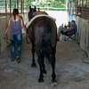 Gianna Rozzi, 14, walks her horse Cruiser out of the barn to ride in the horse and pony competition on Monday night at the Cass County Fair. Fran Ruchalski | Pharos-Tribune