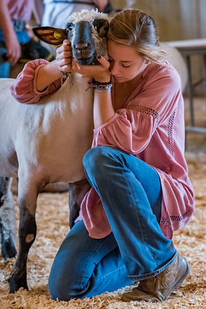 Miah Martin gives her sheep a long hug good-bye before she takes it around the auction ring at the Cass County 4-H Livestock Auction on Saturday afternoon. Fran Ruchalski | Pharos-Tribune