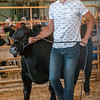 Ten year 4_H member Kace Kitchel, 19, takes his steer around the sale ring at the livestock auction at the Cass County 4-H Fair on Saturday afternoon. Fran Ruchalski | Pharos-Tribune