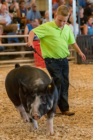 Owen Thomas, 11, takes his hog, Spot, out into the show ring in the Berkshire barrow, 225-240 lbs. class at the Cass County Fair on Thursday afternoon. Fran Ruchalski   Pharos-Tribune