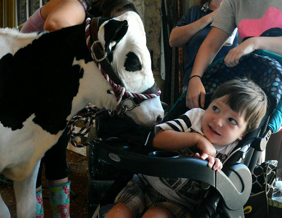 """In this photo taken Friday, July 11, 2014, Bentley Oglesbee isn't sure he wants anything to do with the """"Peanut"""" during Dairy judging at the Cass Co. 4-H Fair in Logansport. (AP Photo/Logansport Pharos-Tribune, Steve Summers)"""
