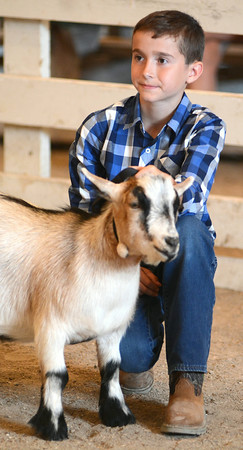 Nolan Young, of Onward IN, keeps his eyes on the judge during Master Showmanship competition in the Pygmy goat class. Young ended up winning the Junior, Senior and Master showmanship titles Tuesday, July 8, 2014 at the Cass County 4-H Fair. (AP Photo/Logansport Pharos-Tribune, Steve Summers)