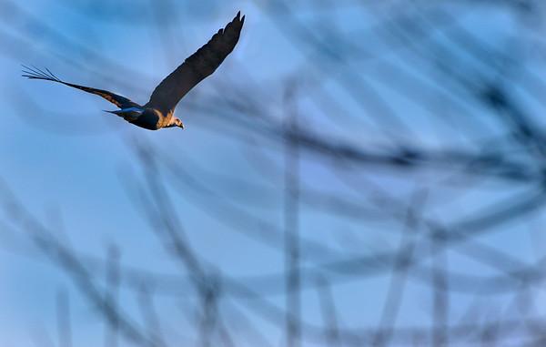 NWS-PT013015-eagles02A.jpg