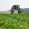 Kory Wilson takes sprayer through one of their tomato farms in Galveston on Tuesday, July 6, 2021. Wilson says they operate on a seven day spray schedule.
