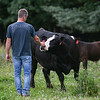 Duane Scott greets one of the cows at Oak Ride Farms on Wednesday, June 30, 2021 in Adams Township.