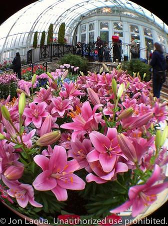 Como Conservatory-April