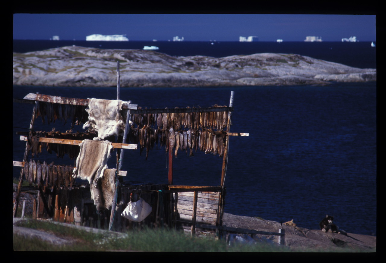 Pelts, drying fish and dog, Ilullisat, Greenland. And those icebergs, always on the march.
