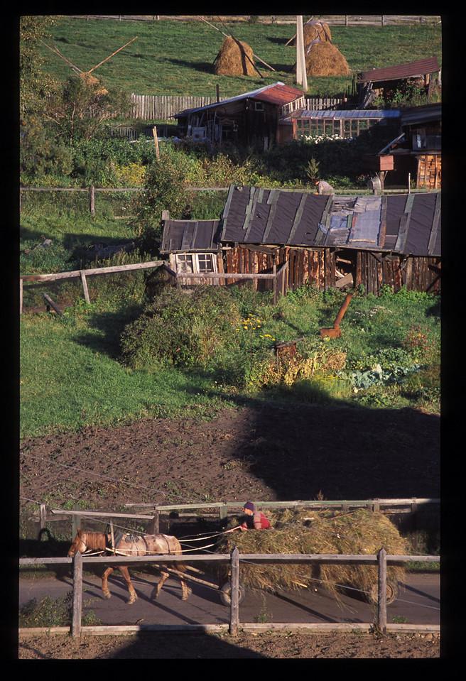 More of the harvest around Listvyanka town.