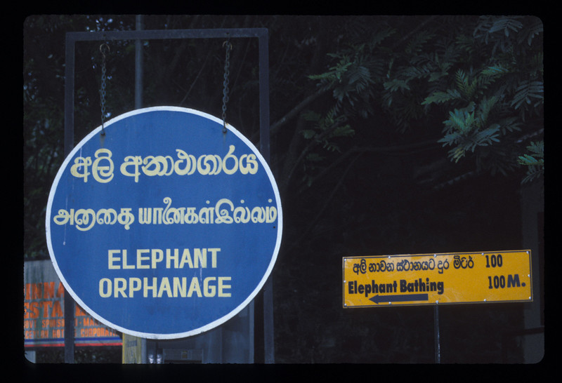 The road to the elephant orphanage, highlands of Sri Lanka near Kegalle.