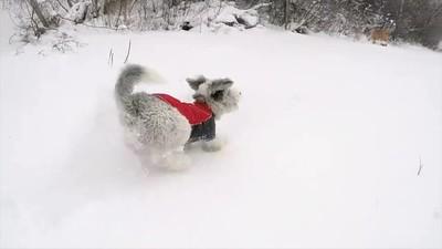 Snow Jingle Short Bright 540p