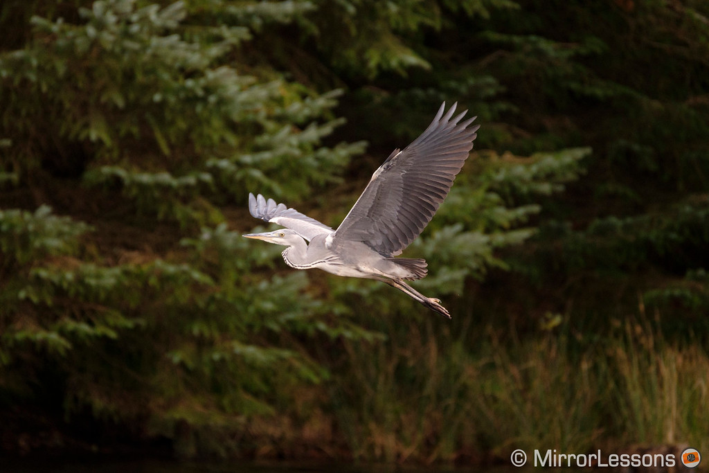best mirrorless camera for birds in flight